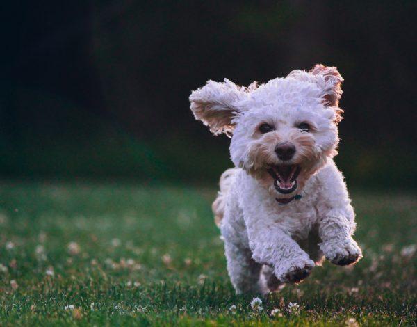 Često svog psa šećete po mraku? Evo nekoliko savjeta
