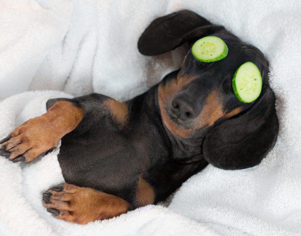 Evo koliko psi u prosjeku spavaju