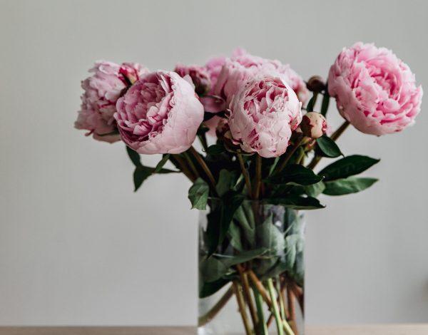 Obožavate božure? Slijedite ovih pet koraka kako bi vam ovi ljepotani duže trajali