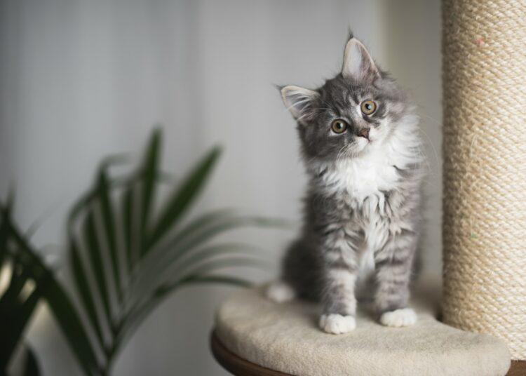 kako pripremiti dom za mačku