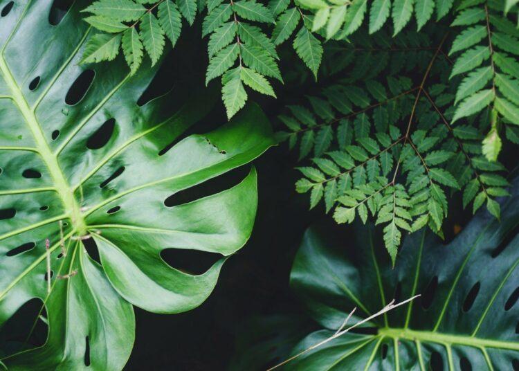 trgovine s biljkama