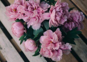 BOŽUR, cvijeće
