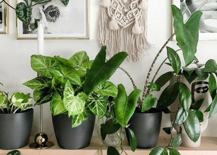 tegla za cvijeće biljke