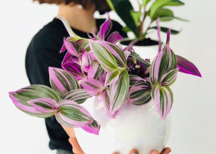 sobne biljke za početnike
