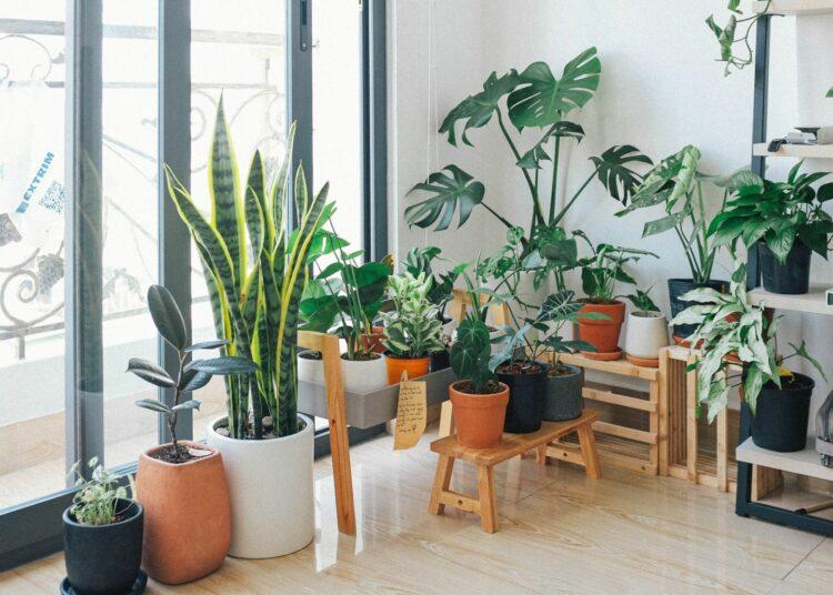 rasprodaja biljaka, biljke, botanički vrt